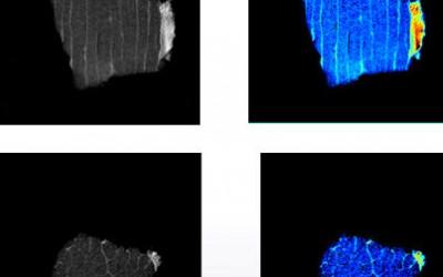核磁共振成像分析方法用于食品品质检测