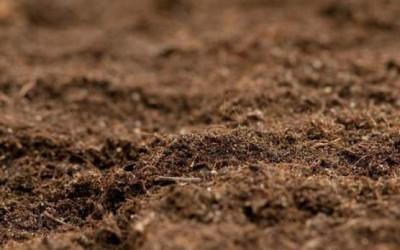污染粉土中柴油在孔隙中的分布规律研究