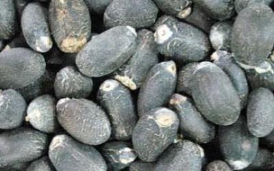 核磁共振法与索氏提取法检测麻疯树种子油含量