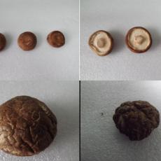 NMI20核磁共振成像分析技术在食品干燥中的应用