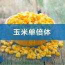 核磁共振在农业领域部分案例-玉米单倍体全自动化分选